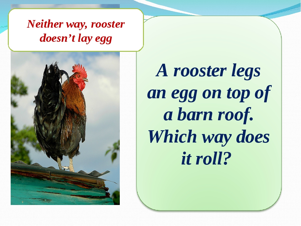Neither way, rooster doesn't lay egg