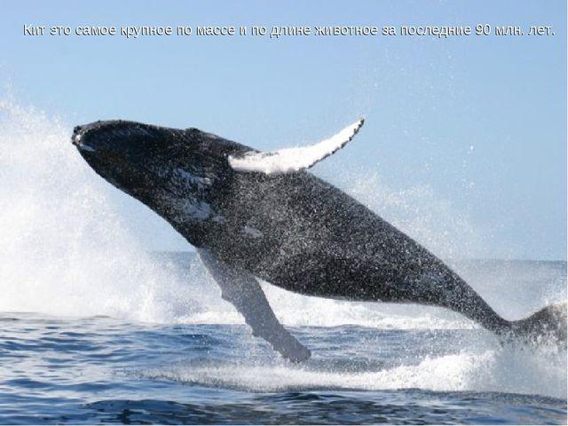 Кит это самое крупное по массе и по длине животное за последние 90 млн. лет....