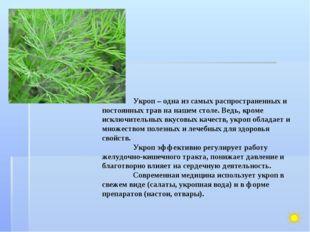 Укроп – одна из самых распространенных и постоянных трав на нашем столе. Вед