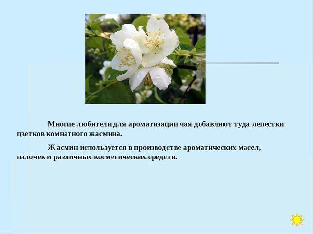 Многие любители для ароматизации чая добавляют туда лепестки цветков комнатн...