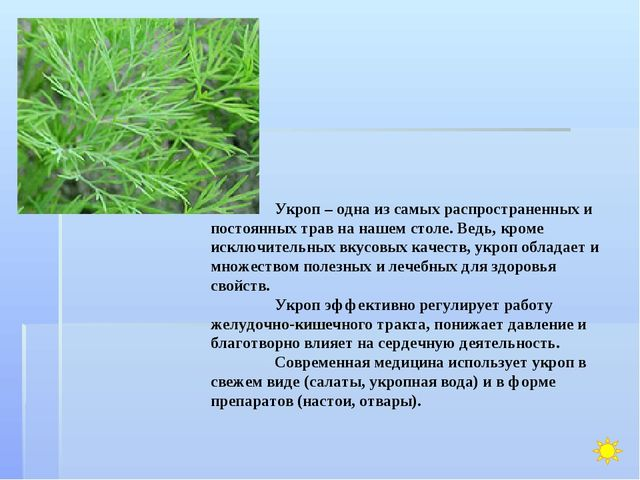 Укроп – одна из самых распространенных и постоянных трав на нашем столе. Вед...