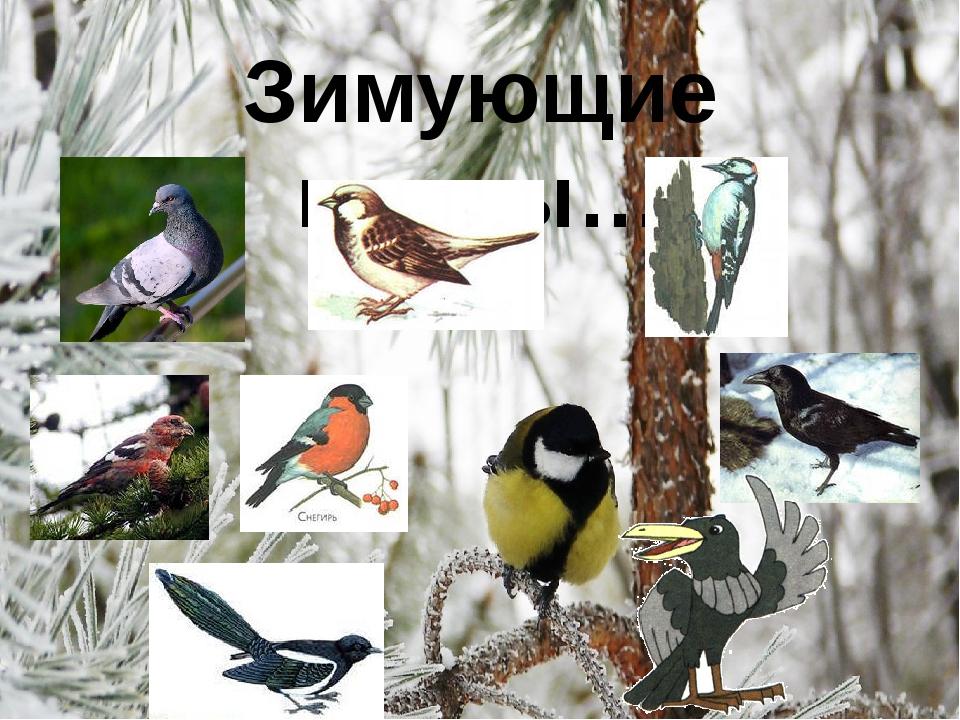 Зимующие птицы…