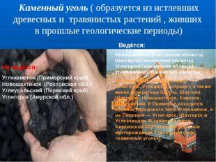 Каменный уголь ( образуется из истлевших древесных и травянистых растений , ж