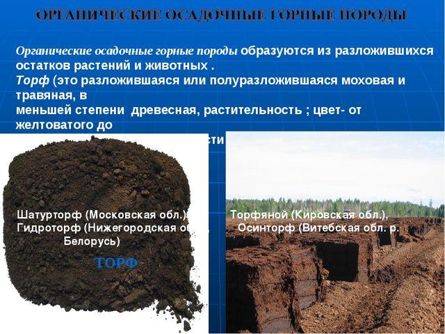 Органические осадочные горные породы образуются из разложившихся остатков ра...