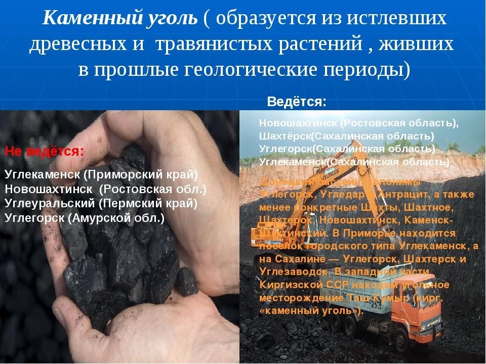 Каменный уголь ( образуется из истлевших древесных и травянистых растений , ж...