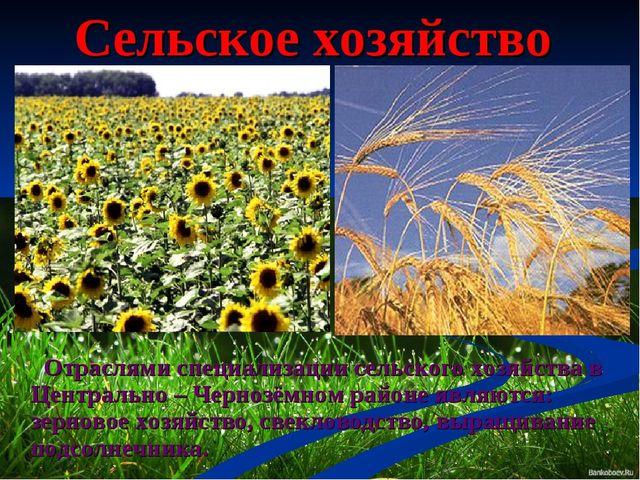 Сельское хозяйство Отраслями специализации сельского хозяйства в Центрально –...