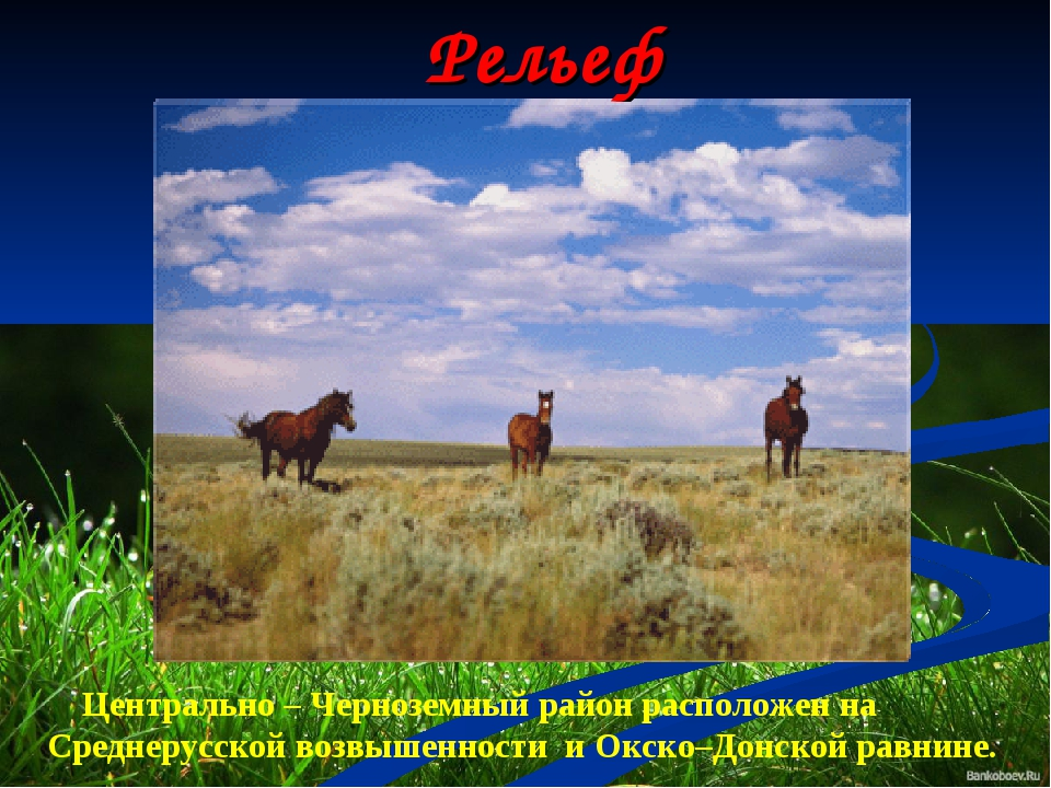 Рельеф Центрально – Черноземный район расположен на Среднерусской возвышеннос...