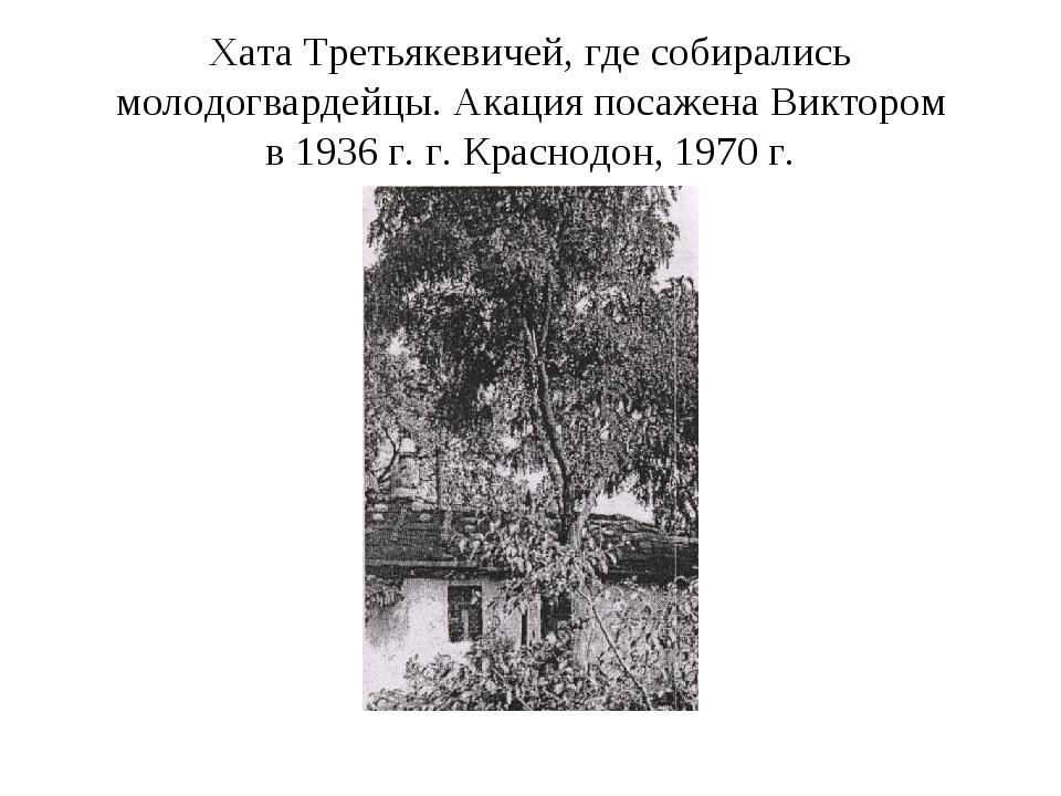 Хата Третьякевичей, где собирались молодогвардейцы. Акация посажена Виктором...