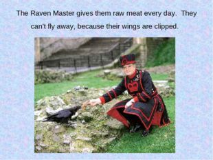 The Raven Master gives them raw meat every day. They can't fly away, because