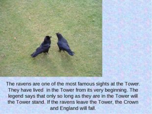 The ravens are one of the most famous sights at the Tower. They have lived in