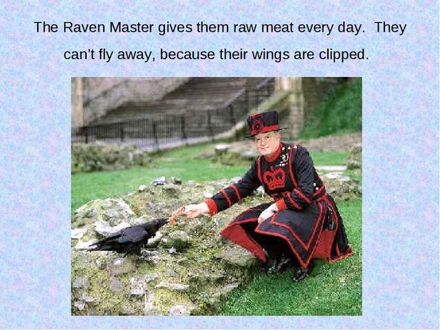 The Raven Master gives them raw meat every day. They can't fly away, because...