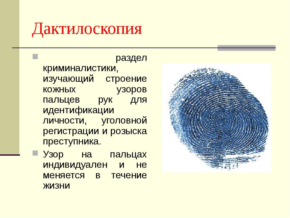 Дактилоскопия раздел криминалистики, изучающий строение кожных узоров пальцев...