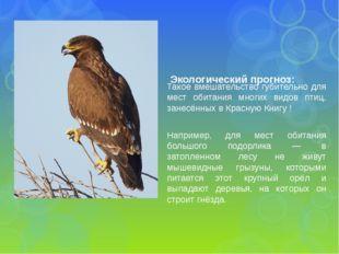 Такое вмешательство губительно для мест обитания многих видов птиц, занесённы
