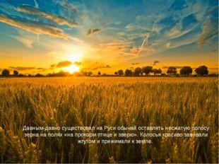 Давным-давно существовал на Руси обычай оставлять несжатую полосу зерна на по