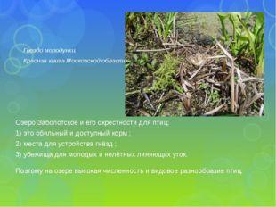 Озеро Заболотское и его окрестности для птиц: 1) это обильный и доступный кор