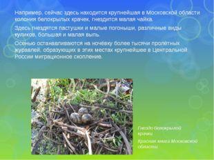 Например, сейчас здесь находится крупнейшая в Московской области колония бело