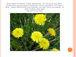 Когда зацвел этот цветок, Солнце обрадовалось: «Ах, как похож он на меня!». В