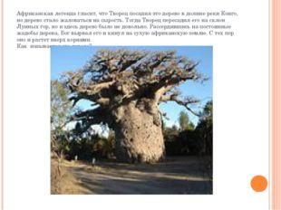 Африканская легенда гласит, что Творец посадил это дерево в долине реки Конго
