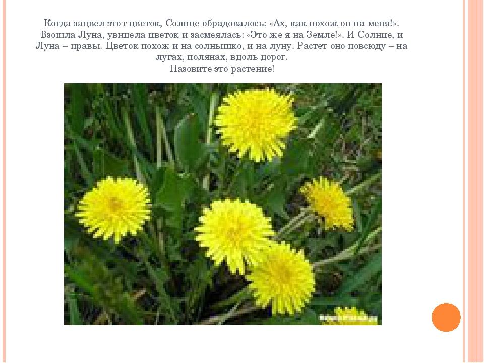 Когда зацвел этот цветок, Солнце обрадовалось: «Ах, как похож он на меня!». В...