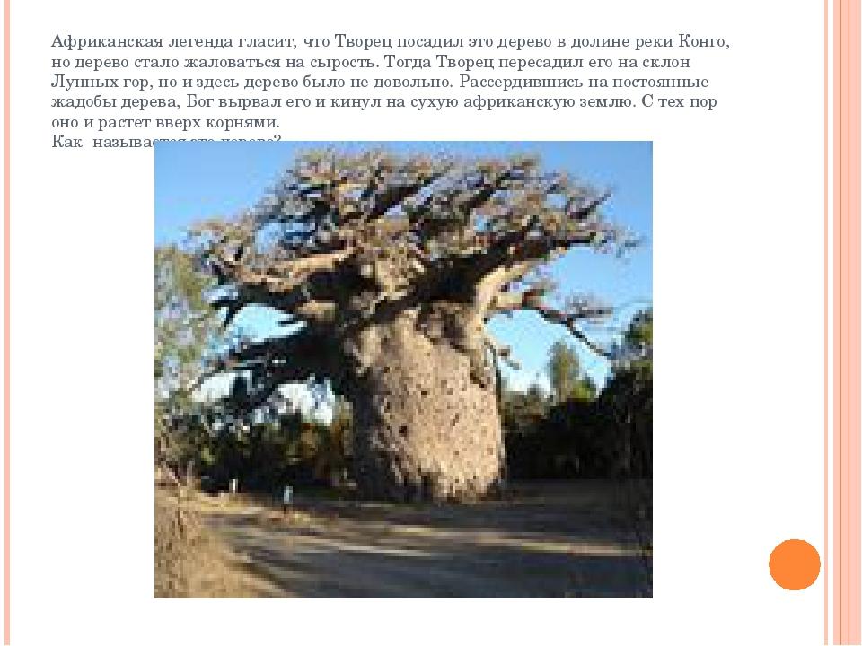 Африканская легенда гласит, что Творец посадил это дерево в долине реки Конго...