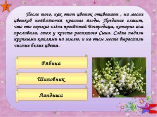 Фиалка Незабудка Сирень 6 Этот цветок возник из слёз невесты при расставани