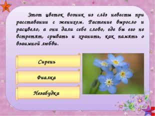 Так маленького Васю называют И те цветы, что в поле собирают. Загадки о цве