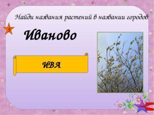Мелитополь ТОПОЛЬ 6 Найди названия растений в названии городов