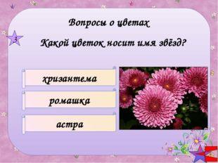 Название цветка – кондитерское изделие КОЛОКОЛЬЧИК ИРИС ТАТАРНИК 5 Вопросы о