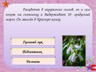 Семена какого цветка используют в кулинарии? НЕЗАБУДКА МАК РОЗА 4