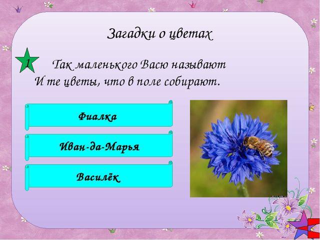 По утрам мои цветки Неказисты и мелки, Зато ночью аромат Наполняет целый сад...