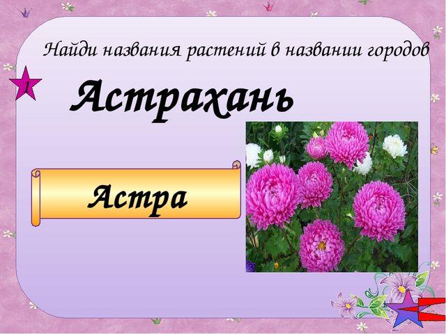 Петрозаводск РОЗА 2 Найди названия растений в названии городов