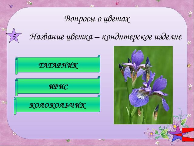 Какой цветок символизирует гордость? РОЗА ТЮЛЬПАН СТОЛЕТНИК 6 Вопросы о цве...
