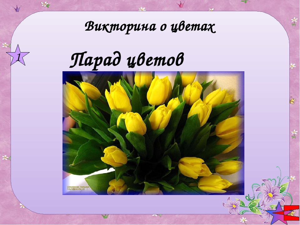 Викторина о цветах Парад цветов 1