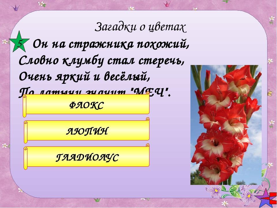 Есть у весеннего цветка Приметы, чтоб не ошибиться: Листик — как у чеснока,...