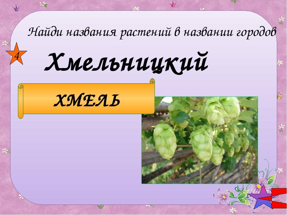 Иваново ИВА 5 Найди названия растений в названии городов
