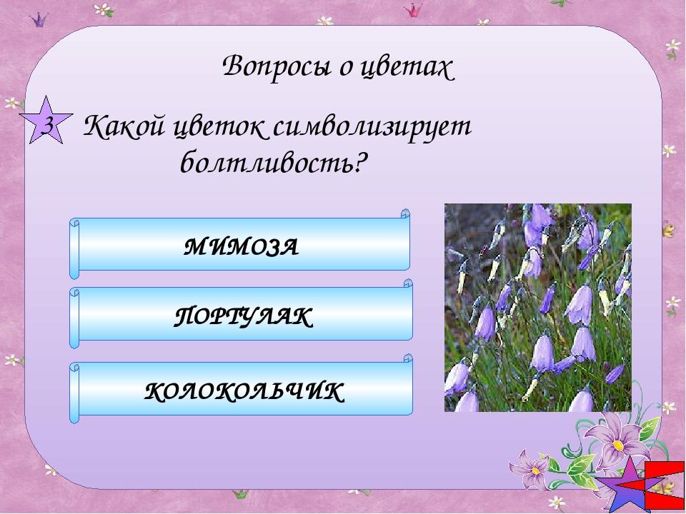 астра ромашка хризантема 3 Вопросы о цветах  Какой цветок носит имя звёзд?
