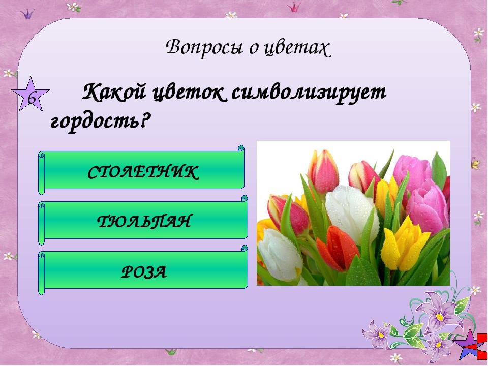 Его цветки - как последняя улыбка осени. Они красивы и неприхотливы - расцв...