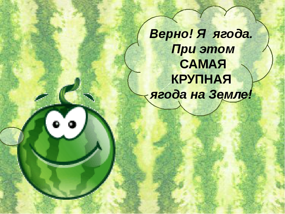 Верно! Я ягода. При этом САМАЯ КРУПНАЯ ягода на Земле!