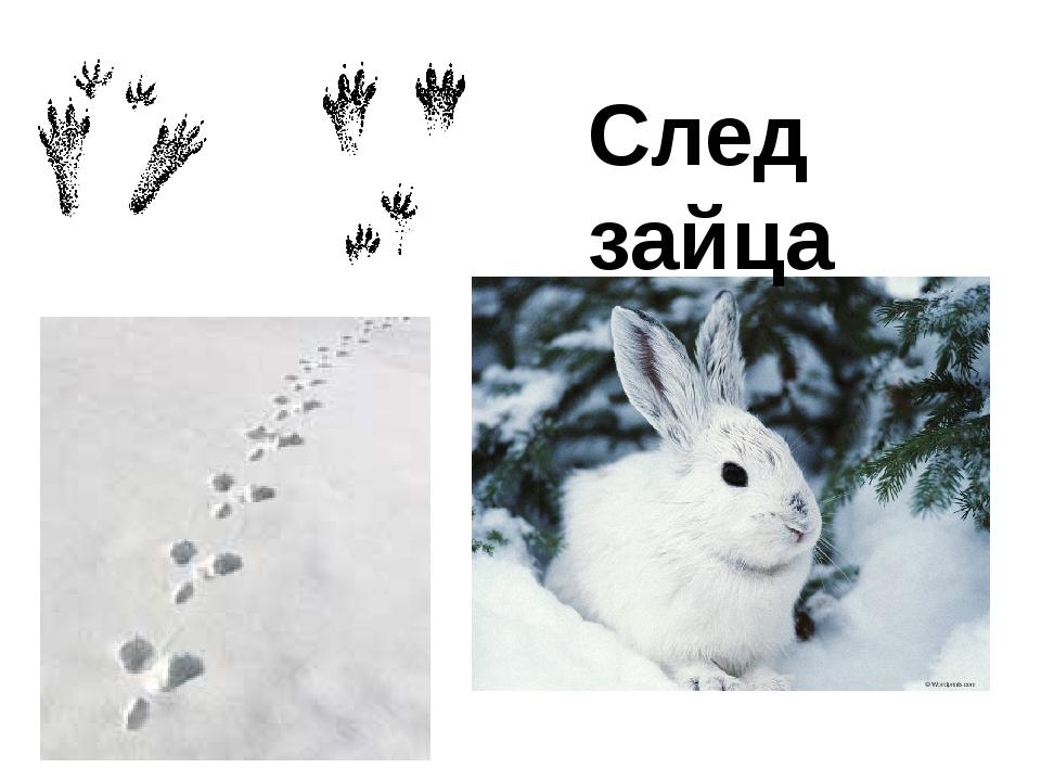 След зайца
