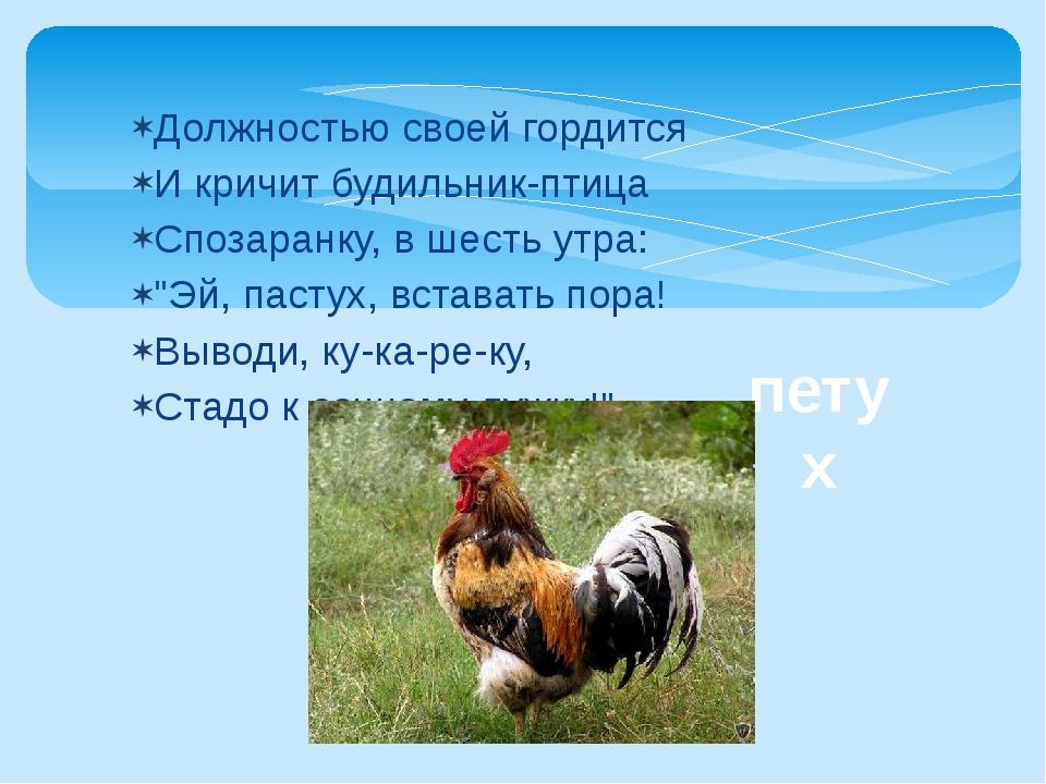 Должностью своей гордится И кричит будильник-птица Спозаранку, в шесть утра:...