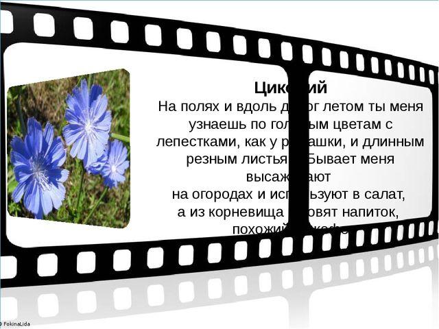 Цикорий На полях и вдоль дорог летом ты меня узнаешь по голубым цветам с леп...