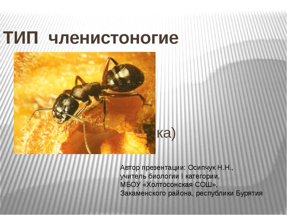 ТИП членистоногие (общая характеристика) Автор презентации: Осипчук Н.Н., учи...