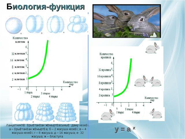 Биология-функция Ланцетниктің ұрықтанған жұмыртқасының даму кезеңі. а – ұрық...