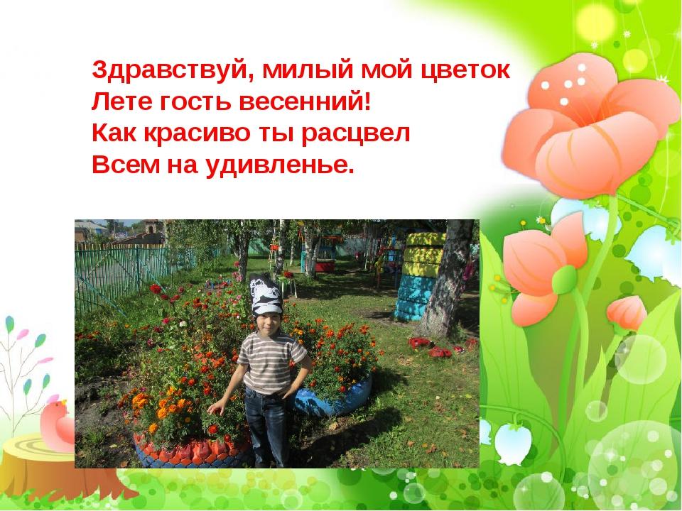 Здравствуй, милый мой цветок Лете гость весенний! Как красиво ты расцвел Всем...