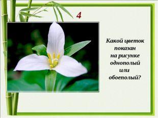4 Какой цветок показан на рисунке однополый или обоеполый?