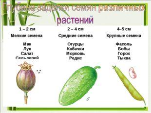 1 – 2 см2 – 4 см4–5 см Мелкие семена Средние семенаКрупные семена Мак