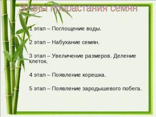 1 этап – Поглощение воды. 2 этап – Набухание семян. 3 этап – Увеличение разме