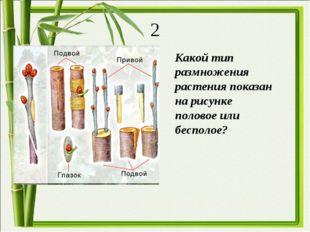 Какой тип размножения растения показан на рисунке половое или бесполое? 2