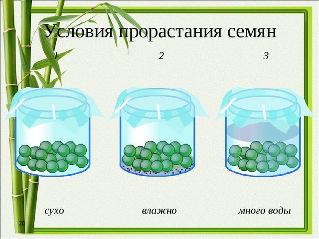 * Условия прорастания семян сухо влажно много воды 1 2 3