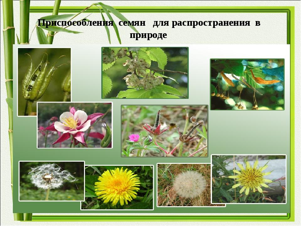 Приспособления семян для распространения в природе